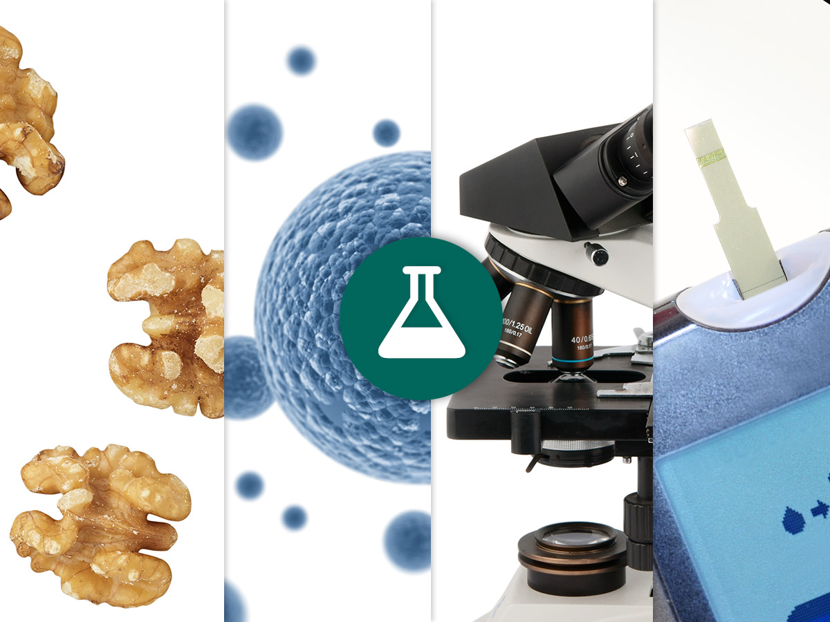 tiled images of walnuts, human cellls, a high powered microscope, and a diabetes monitor, with a science beaker icon over top