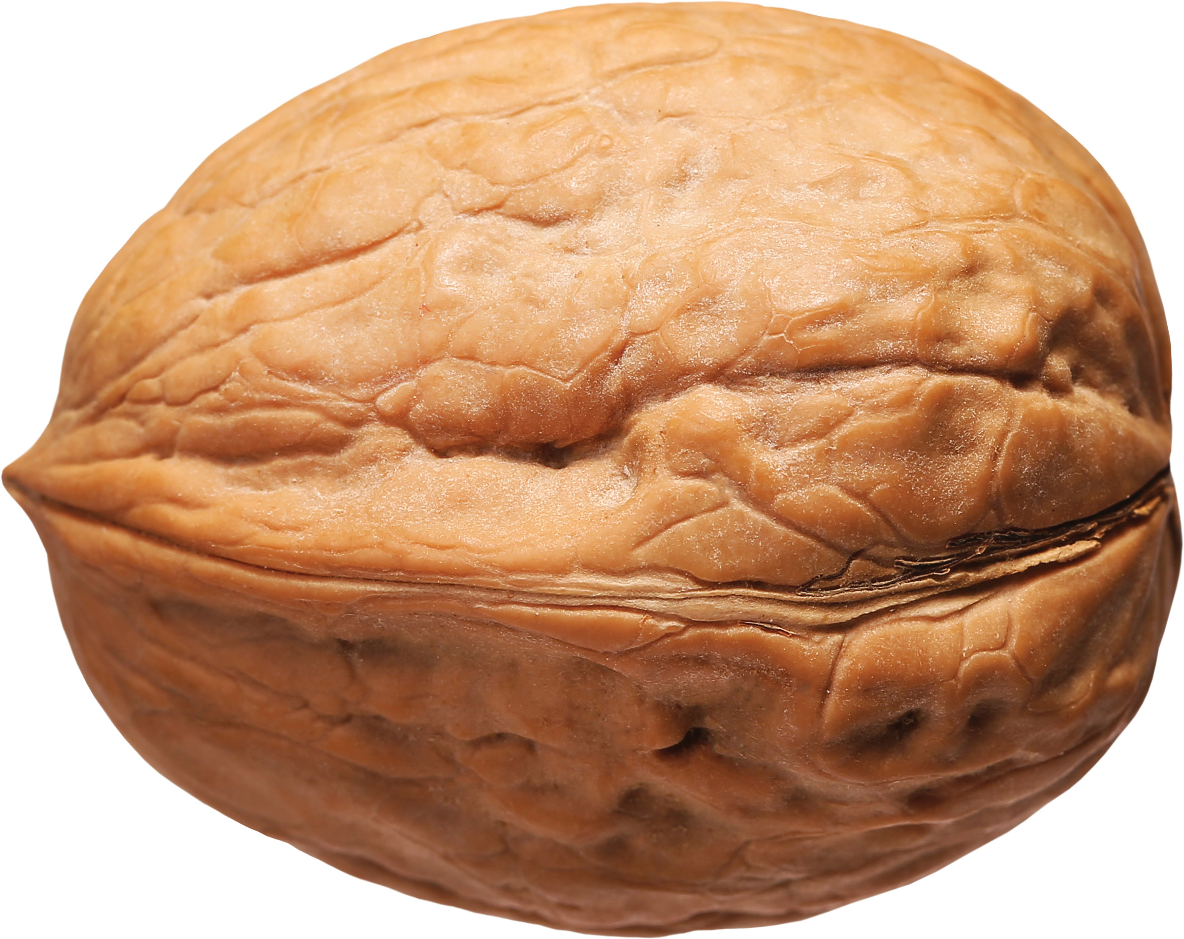 a walnut in its shell