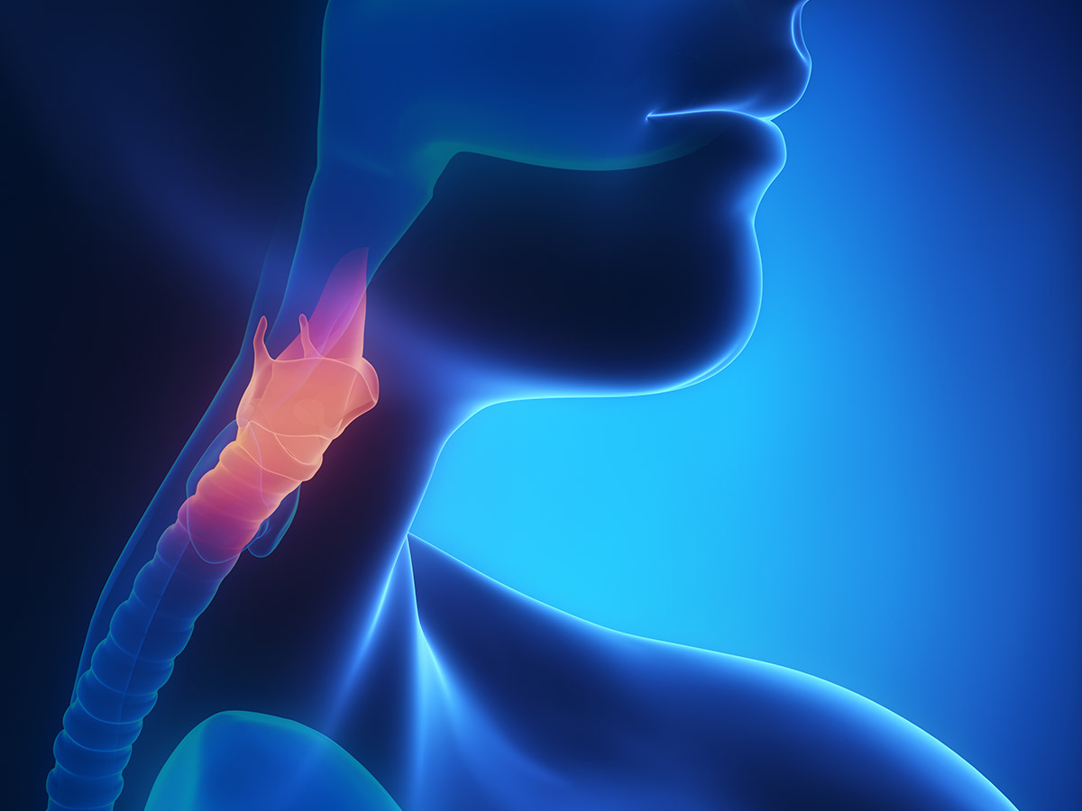 digital rendering of inside throat